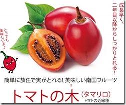 トマトの木5